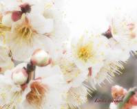 孫生えは花盛り - Spring PHOTO