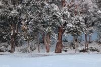 ひと月前の雪景色 - きょうだい猫と仲良し暮らし