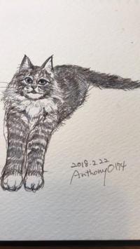 一日一絵  2月22日  今日は猫の日 - ~メインクーンと一緒~デナちな日々