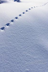 Snow*days**冬の軌跡 - きまぐれ*風音・・kanon・・