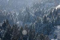 2月の雪 - 但馬・写真日和