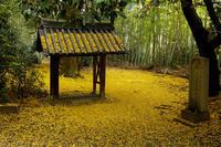 京都の紅葉2017 黄に染まる山崎聖天 - 花景色-K.W.C. PhotoBlog