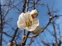 2/20 『蓮尾寧子展』へ - アオモジノキモチ