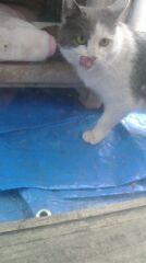今日は猫の日☆ - 占い師 鈴木あろはのブログ