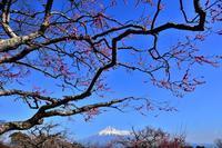 岩本山公園 - 風とこだま