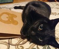 今日は猫の日222 - アイアン工房 製作ブログ