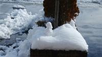 雪だるま - 魚津でもクマクマな日々