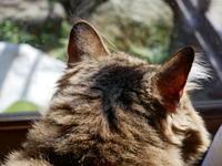 春が来た♪ - ご機嫌元氣 猫の森公式ブログ