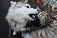 春らんまん♡いきもの祭り~♪(^o^) - 犬連れへんろ*二人と一匹のはなし*