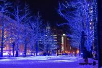 赤レンガ広場の青の洞窟 - 柳に雪折れなし!Ⅱ