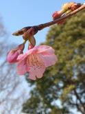 桜咲く - takatakaの日記