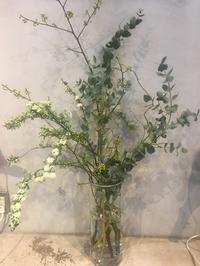 植物のある生活、 - kief  代官山