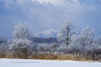 よく晴れた厳寒の朝 - ekkoの --- four seasons --- 北海道