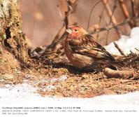 埼玉県県民の森 2018.2.18 - 鳥撮り遊び
