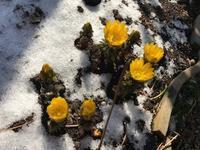また雪が降りました。 - BANNAI*blog