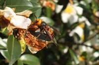 ■擬態する虫たち(4)18.2.23 - 舞岡公園の自然2