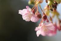 春色のさゝやき - ecocoro日和