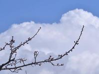 雪雲 - 1/365 - WEBにしきんBlog