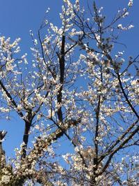 春間近🌷 - 太陽のように