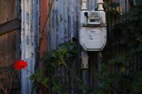 青いトタンと赤い花 - HTY photography club