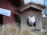 2月22日は2月22日は「ニャンニャンニャン」のネコの日でした。 - ダイちゃんの生活 Part2