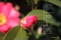 冬に咲く花 - 花の咲み、花のうた、きらめく地上 ―― photo&poem gallery kanon