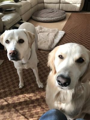 その後、プラハへ - 盲導犬イザベルとウォルターを育てる日々 パピーウォーカー日記からの、愛犬キースとプラハ生活!
