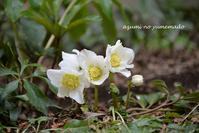 小さな春を感じています♪ - azumiの夢まど