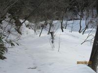 森に入ってみた。(途中まで) - 宮迫の! ようこそヤマボウシの森へ