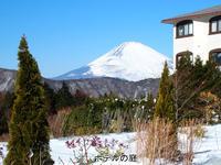 【冬の箱根路】(2) -  ★ 野草デジカメ日記★