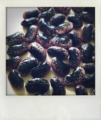 大きな花豆。 - Quality Of Life??