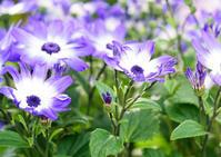 温室の花(百合が原公園) - お茶にしませんか