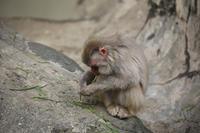 モヒカン猿との出会い - 動物園のど!