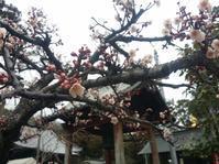 四国八十八箇所霊場 一番札から十番札 - 雨 ときどき 晴れ