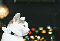 天使の羽の猫たち - photomo