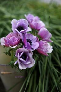 アネモネレリティ -  La Fleur