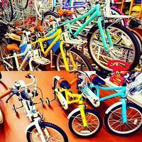 コーダブルームいろいろ🎵✨❤ - 滝川自転車店