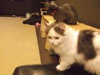 アンナ・カレーニナとメドベーデワ - シェークスピアの猫