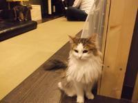 松本清張の「遺言」 - シェークスピアの猫