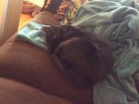 ネコ: 丸く寝る - にゃんこと暮らす・アメリカ・アパート(その2)