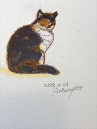 一日一絵     ご近所猫ちゃん - ~メインクーンと一緒~デナちな日々