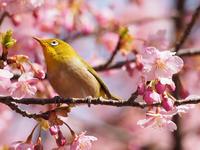 春の気配 - My favorite corner
