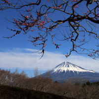 富士山&梅 - kurione9の気儘なフォトブログ