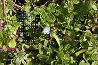 しあわせの素 - 花の咲み、花のうた、きらめく地上 ―― photo&poem gallery kanon