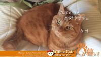 ひざのうえ お好きです。な日 - 猫と暮らす とら猫JOYのもふもふ日記 - The SKY - Timelapse. :: 猫と暮らす(ΦωΦ)