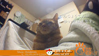 天上天下 由比ヶ浜ナス。な日 - 猫と暮らす とら猫JOYのもふもふ日記 - The SKY - Timelapse. :: 猫と暮らす(ΦωΦ)