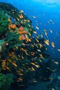 人工物と花 - Diving Life ~Aita pe'a pe'a~
