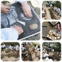 じゃが芋の植え付け:年中組 - ひのくま幼稚園のブログ
