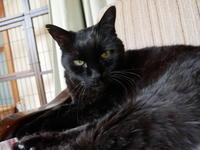 ただいま、猫楠エイト - ご機嫌元氣 猫の森公式ブログ