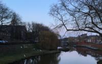 あひるの群れ/デンボッシュ - Nederlanden地位向上委員会